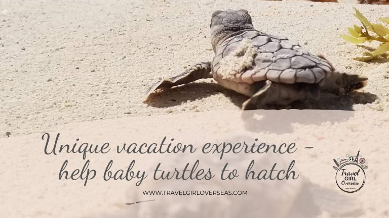 Unique vacation experience - Help baby turtles to hatch